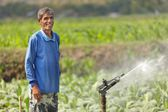 Asian farmer watering plant — Stock Photo