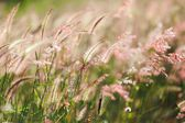 Meadow under sunlight — Stock Photo