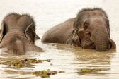 Elephant swimming — Stock Photo