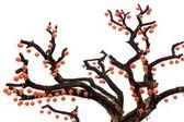 Китайский фонарь на дерево — Стоковое фото