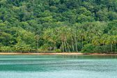 Tropical beach and forest — Stok fotoğraf