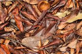 Tropical fallen leaves — Stock Photo