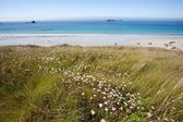 красивый дикий пляж — Стоковое фото