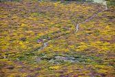 Flowered moor — Stock Photo