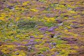 Flowers in moor — Stock Photo