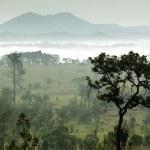 Tropical morning fog — Stock Photo