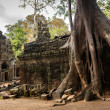 Angkor tree roots — Stock Photo