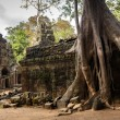 Angkor tree roots - Stock Photo