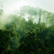 Morning misty tropical forest — Stock Photo #19184919