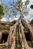 Ta prohm tempel — Stockfoto