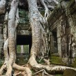 Ta Prohm temple — Stock Photo #19531899