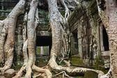 храм вступления ta — Стоковое фото