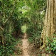 Tropical forest path — Stock Photo