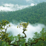 Rainforest morning fog — Stock Photo