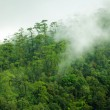 Tropical forest morning — Stock Photo #19779971