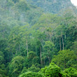 Tropical rainforest — Stock Photo #19779989