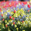 Spring flowerbed - Stock Photo