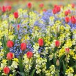 Spring flowerbed — Stock Photo