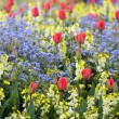 Spring flowerbed — Stock Photo #25998505