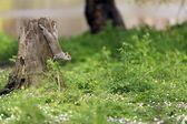 Schattige eekhoorn — Stockfoto