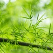 Bamboo leaves — Stock Photo #30397763