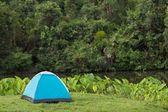 Vahşi doğada çadır — Stok fotoğraf