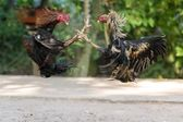 Fighting cocks in a vicious attack — Stock Photo
