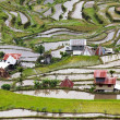 Rice fields in Philippines — Stock Photo