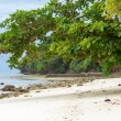 Sea almond trees on beach — Stock Photo #42459097
