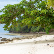 Sea almond trees on beach — Stock Photo