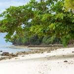 Sea almond trees on beach — Stock Photo