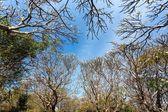 Plumeria forest — Stock Photo