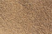 Fresh harvested rice drying — Stock Photo