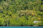 Tropical jungle coastline — Stock Photo