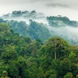 Jungle morning fog — Stock Photo