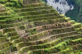 Rice terraces details — Stock Photo