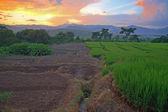 Terrasserade risfält i solnedgången av hdr skott — Stockfoto