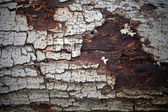 Cracked bark texture — Stock Photo