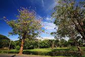 Botanic garden at spring against blue sky — Stock Photo