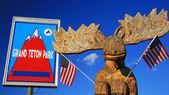 Moose socha s usa příznaky v parku grand teton — Stock fotografie