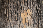 Tree bark texture — Stock fotografie