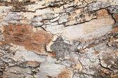 Textura de corteza de árbol de grunge — Foto de Stock