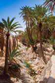 Mountain oasis Chebika in Tunisia — Stock Photo