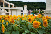 Sunflowers in four seasons park in Everland in South Korea — Stock Photo