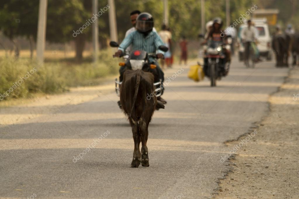 Cows and bikes on the same road in Nepal — Stock Photo #12214092