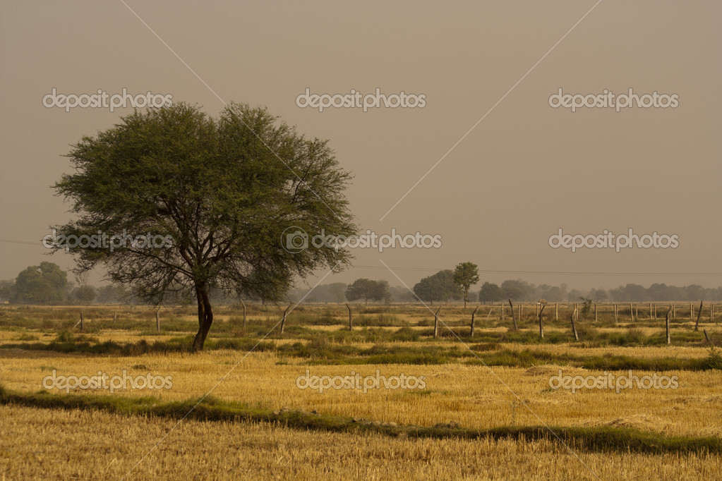 A tree in the nepal field — Stock Photo #12214149