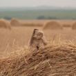 Teddy bear sitting in a haystack — Stock Photo