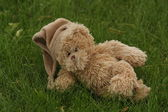 Teddy bear lying on the green grass — Stock Photo