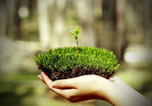 Moss with the sprout of grass — Stock Photo