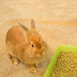 Young rabbit sitting near food tray — Stock Photo